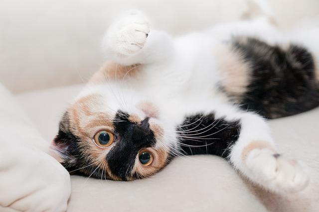 「おじさまと猫」人気の理由はふくまるの可愛さだけじゃない?
